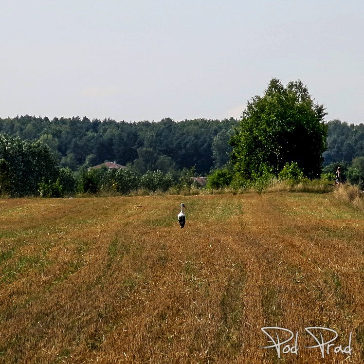 Nasz, Polski bocian ;)