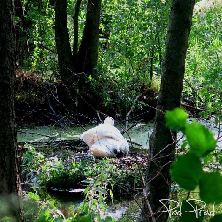 Na terenie Rezerwatu Niebieskie Źródła