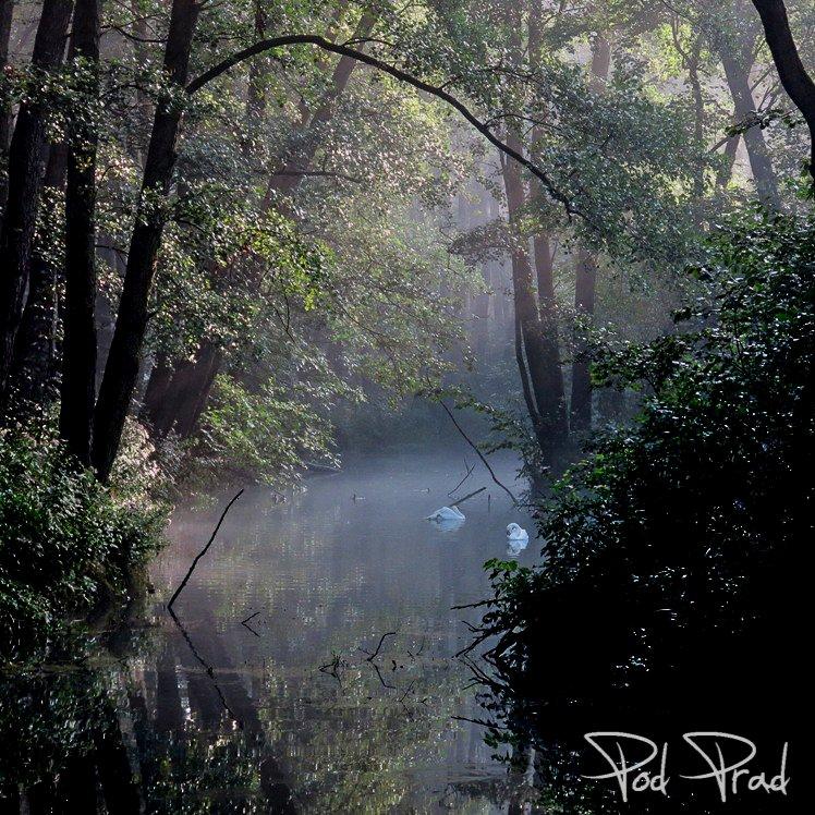 Rezerwat Niebieskie Źródła podczas letniego, wczesnego poranka