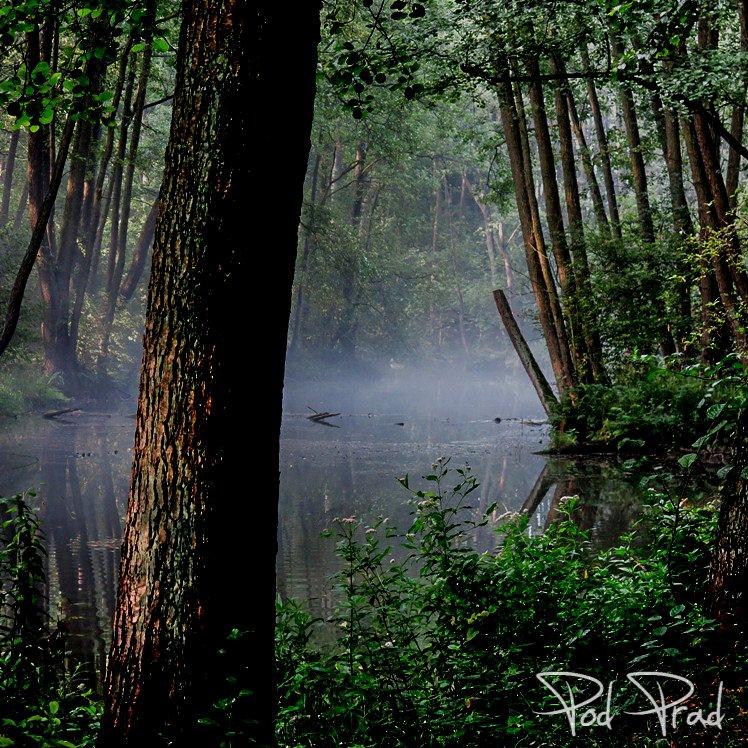 Rezerwat Niebieskie Źródła otulone mgła